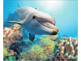 """Алмазная выкладка """"Добрый дельфин"""" 40х50"""