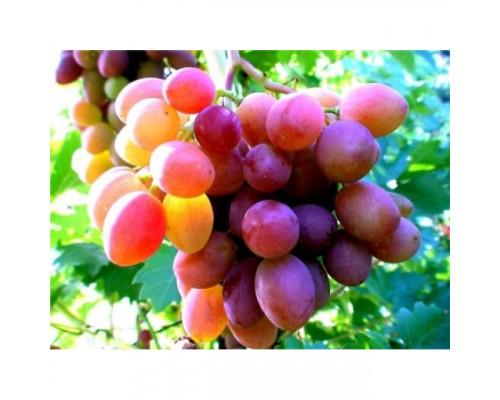 Фруктовая пудра сухая, Виноград