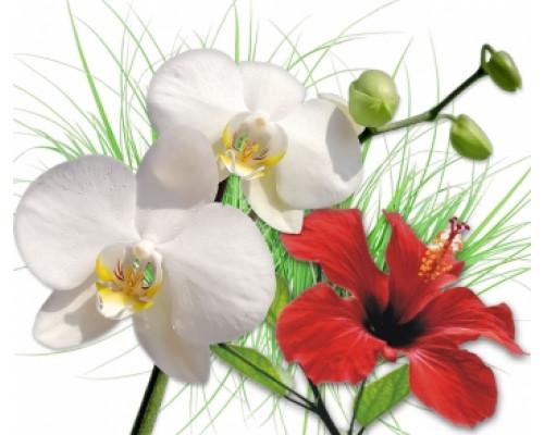 Отдушка, Орхидея и гибискус