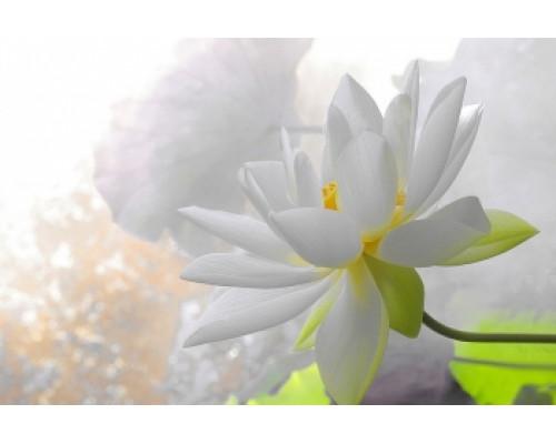 Отдушка, Белый лотос с орхидеями