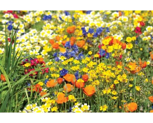 Отдушка, Цветочная поляна