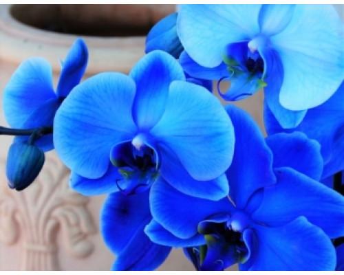 Отдушка, Голубая орхидея и кашемир