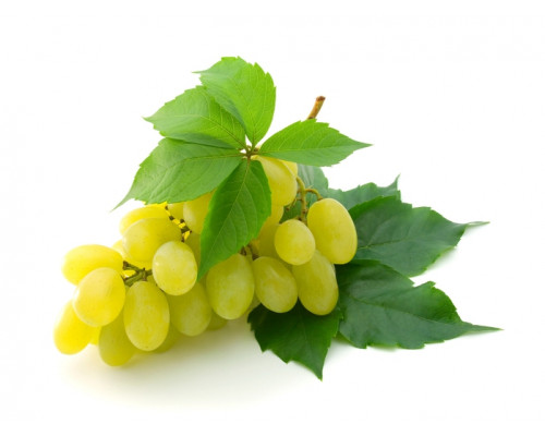 Отдушка, Виноград