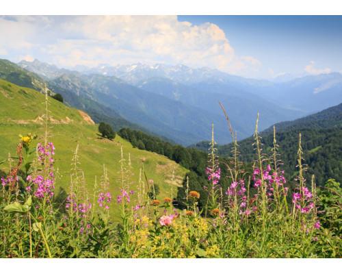 Отдушка, Альпийские травы