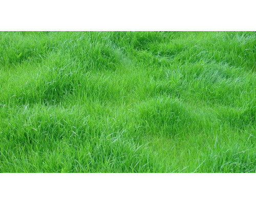 Отдушка, Скошенная трава