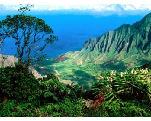 Отдушка, Гавайский аромат